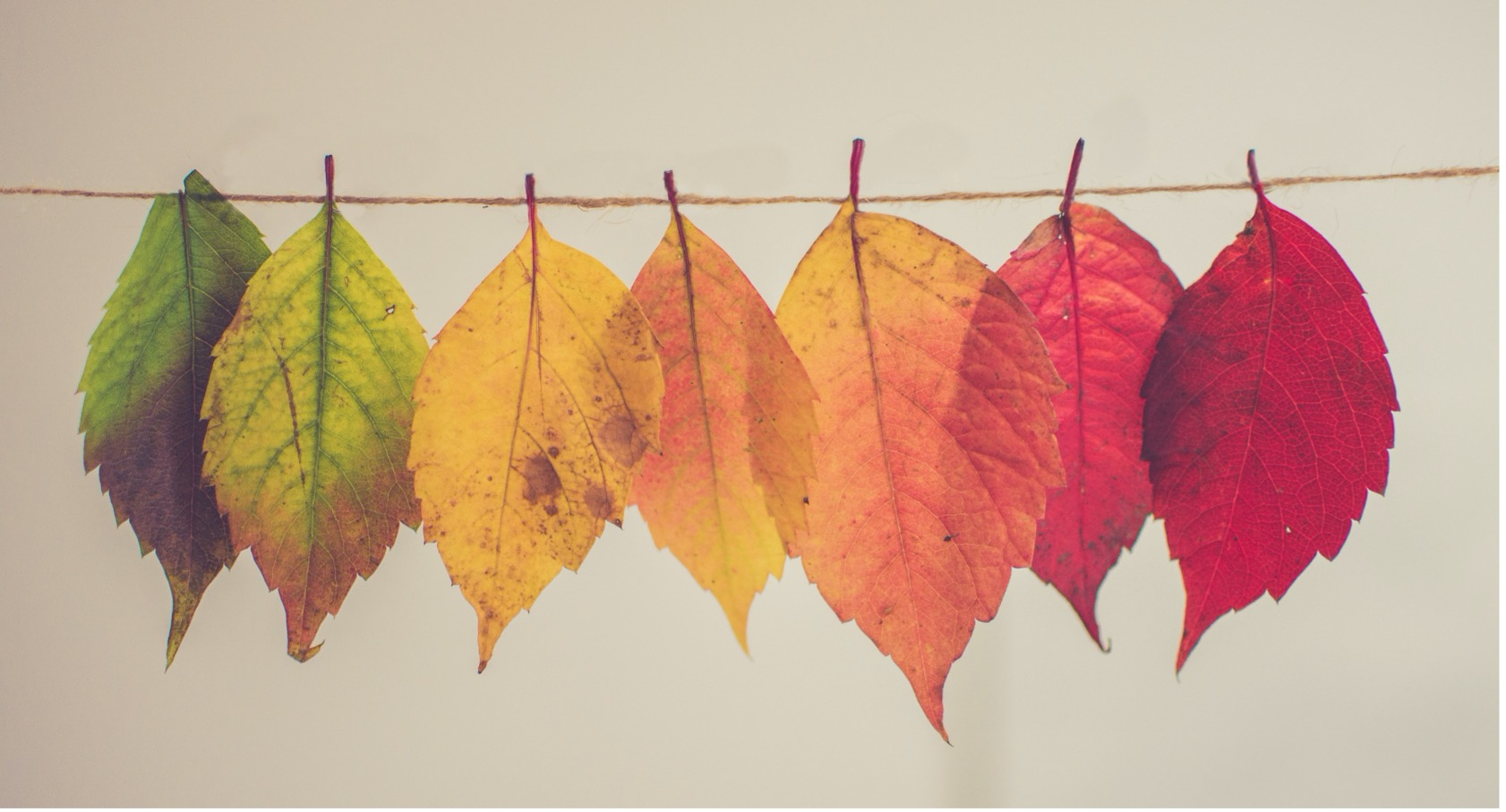 Fall leaves on a string